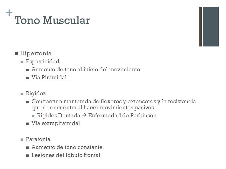 Tono Muscular Hipertonía Espasticidad