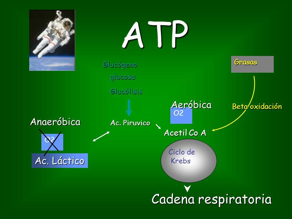 ATP Cadena respiratoria Aeróbica Anaeróbica Ac. Láctico Acetil Co A