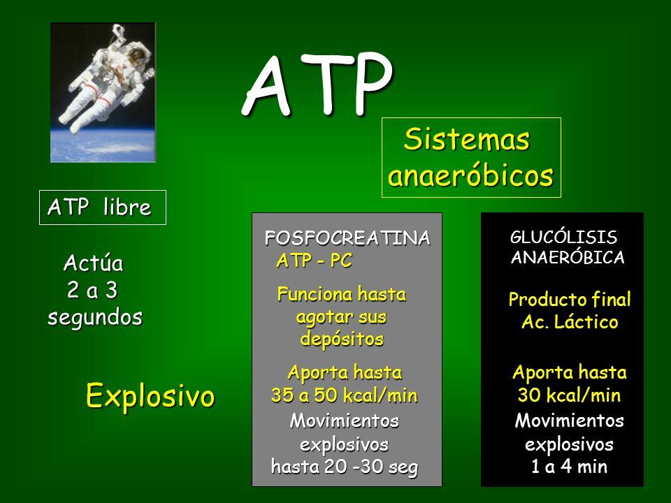ATP Sistemas anaeróbicos Explosivo ATP libre Actúa 2 a 3 segundos
