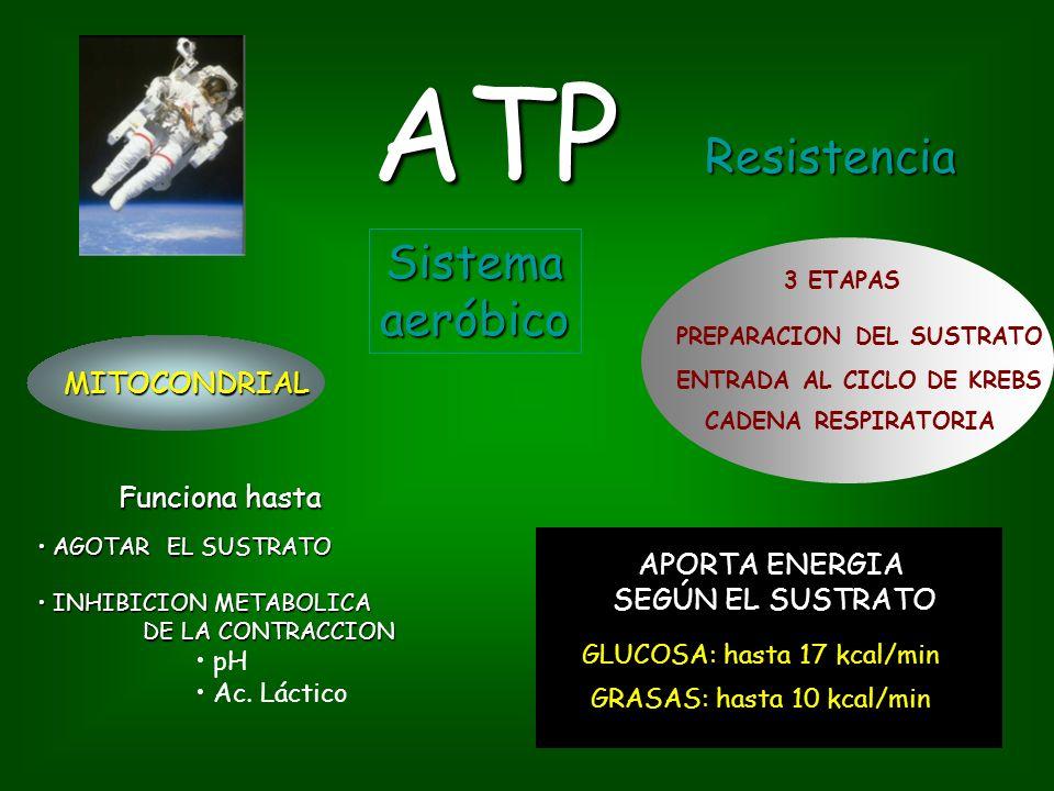 ATP Resistencia Sistema aeróbico MITOCONDRIAL Funciona hasta