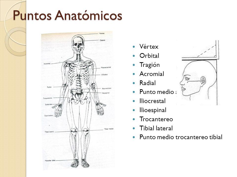 Puntos Anatómicos Vértex Orbital Tragión Acromial Radial