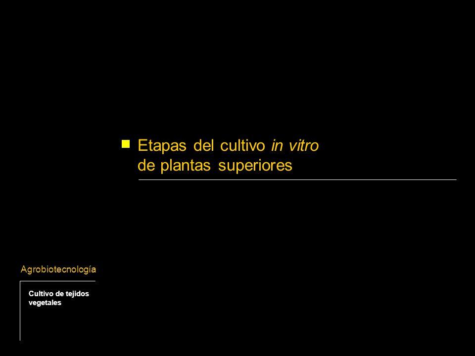 Etapas del cultivo in vitro de plantas superiores