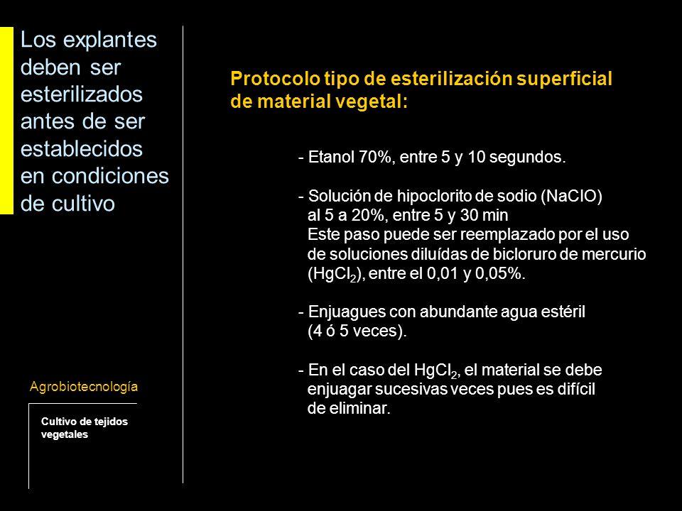 Los explantes deben ser esterilizados antes de ser establecidos en condiciones de cultivo