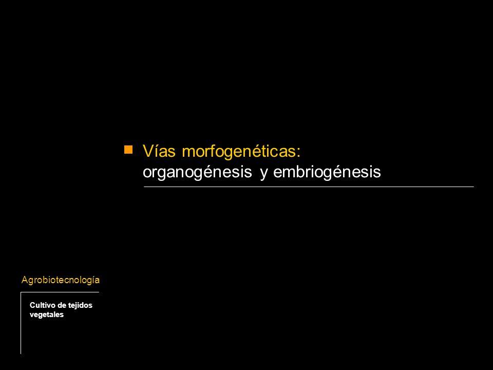 organogénesis y embriogénesis