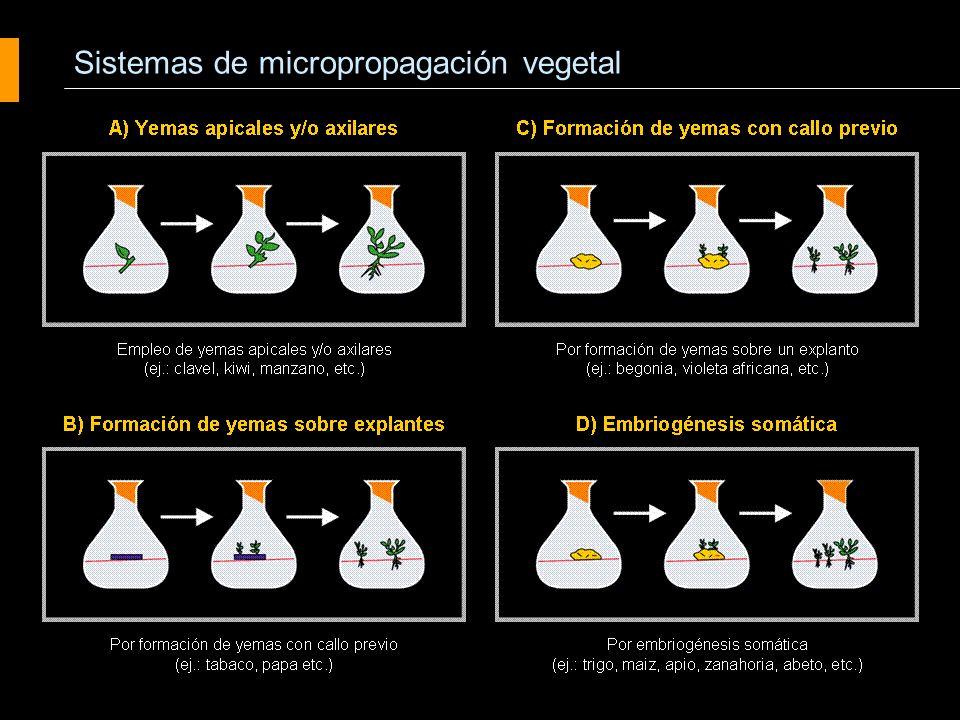 Sistemas de micropropagación vegetal