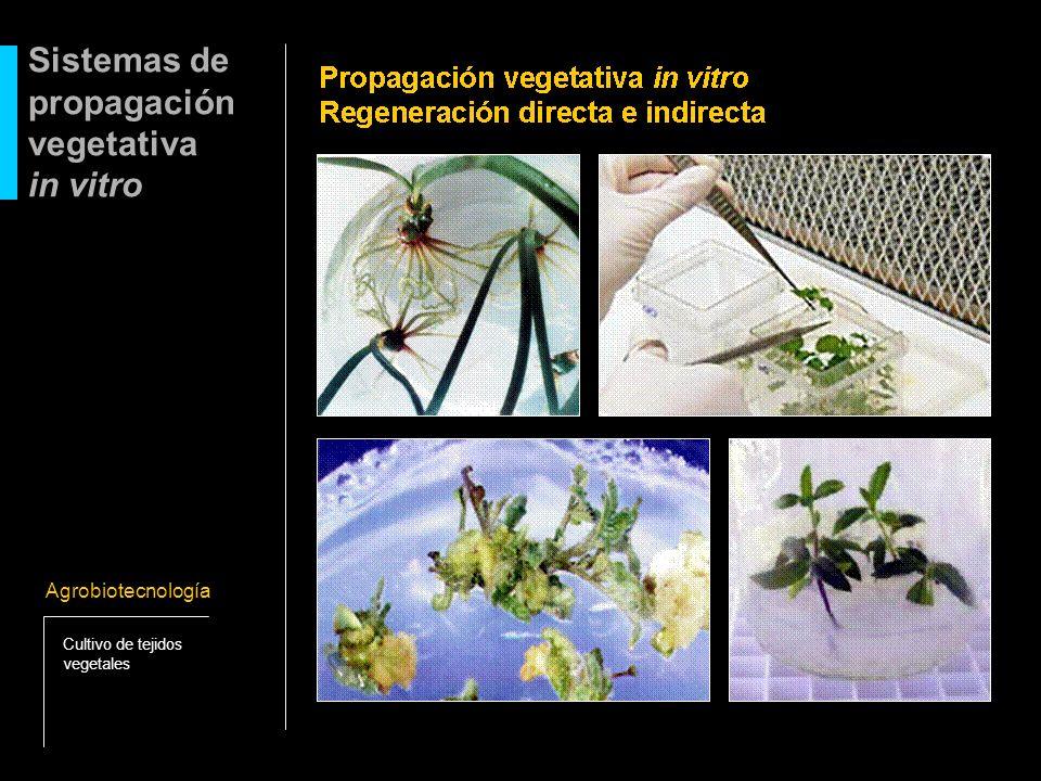 Sistemas de propagación vegetativa