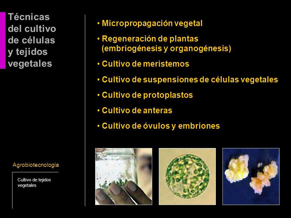del cultivo de células y tejidos vegetales
