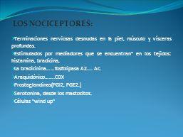 LOS NOCICEPTORES: Terminaciones nerviosas desnudas en la piel, músculo y vísceras profundas.