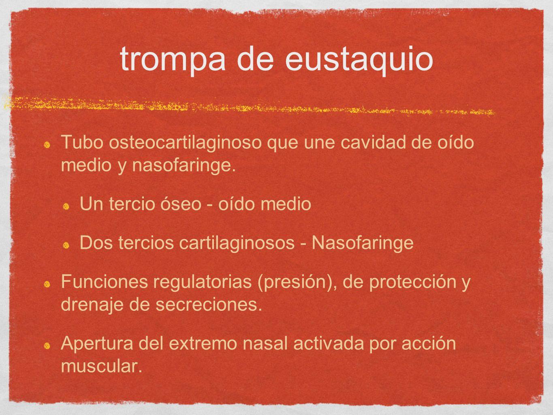 trompa de eustaquio Tubo osteocartilaginoso que une cavidad de oído medio y nasofaringe. Un tercio óseo - oído medio.