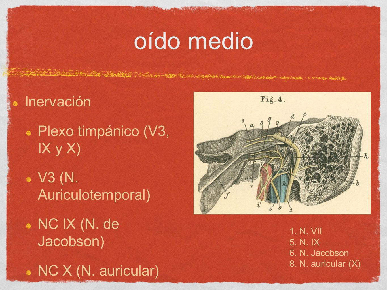 oído medio Inervación Plexo timpánico (V3, IX y X)