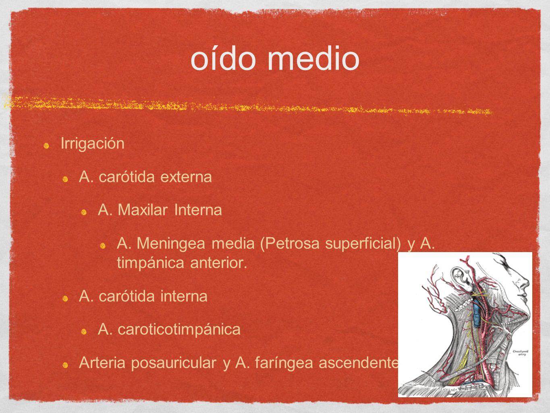 oído medio Irrigación A. carótida externa A. Maxilar Interna