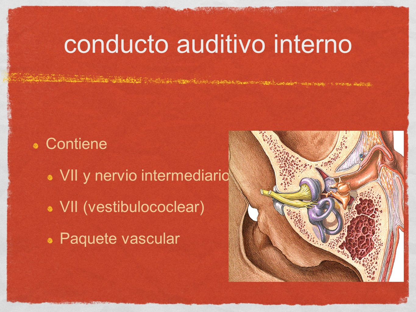 conducto auditivo interno