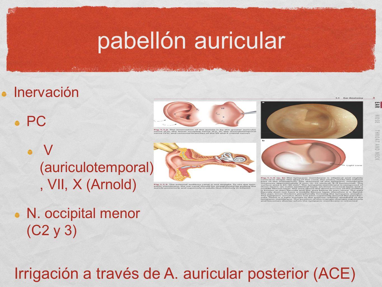 Irrigación a través de A. auricular posterior (ACE)