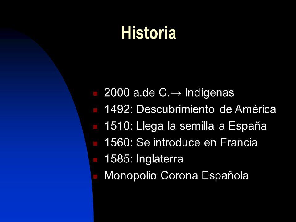 Historia 2000 a.de C.→ Indígenas 1492: Descubrimiento de América