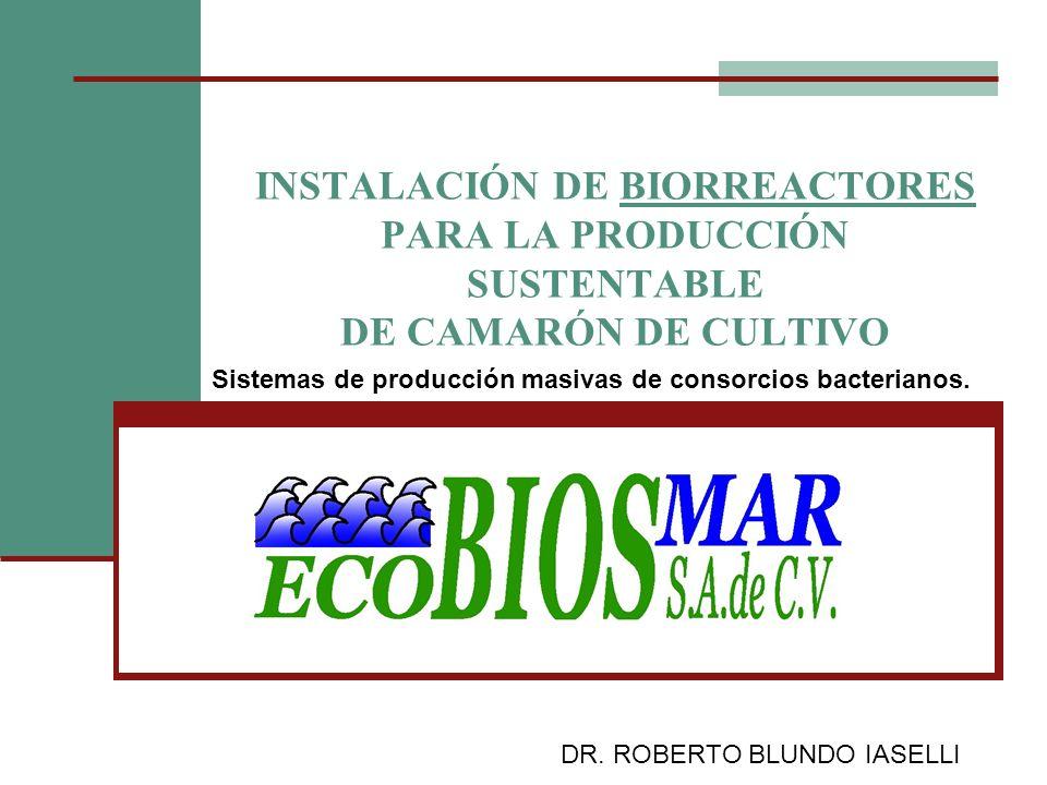 INSTALACIÓN DE BIORREACTORES PARA LA PRODUCCIÓN SUSTENTABLE DE CAMARÓN DE CULTIVO