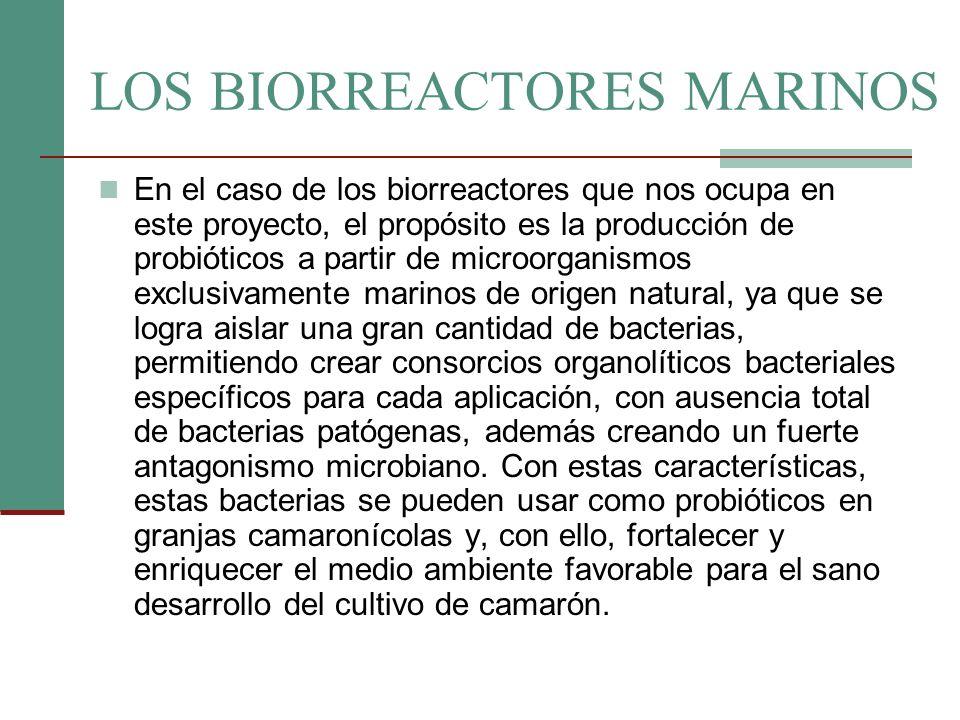 LOS BIORREACTORES MARINOS