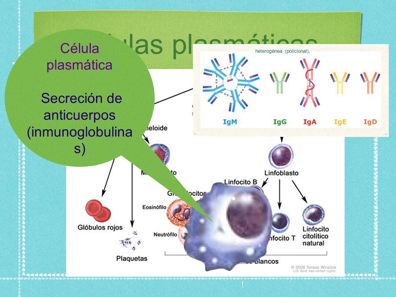 Secreción de anticuerpos (inmunoglobulinas)