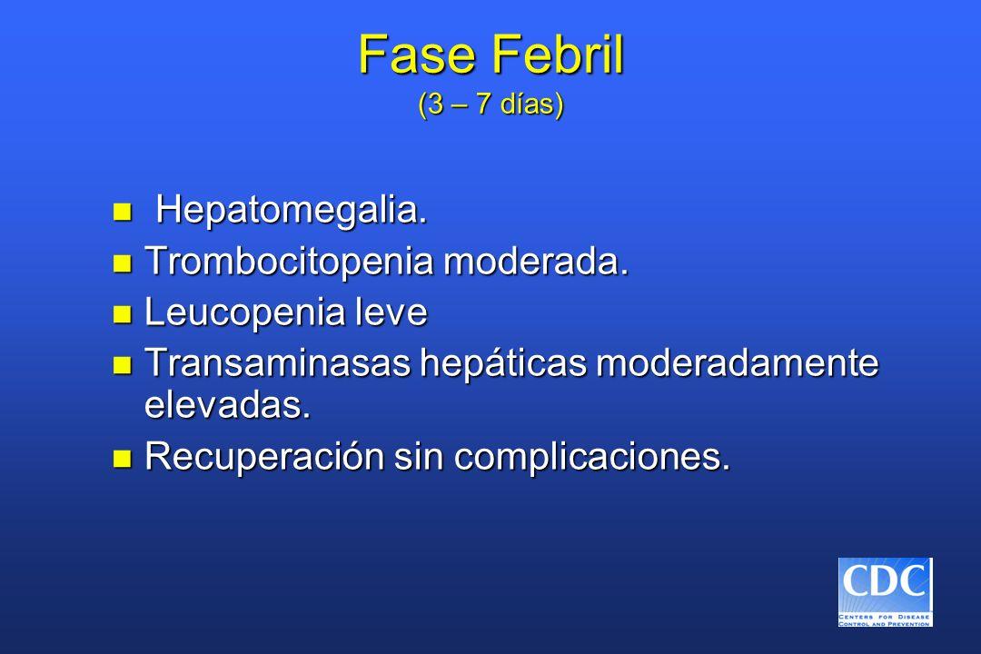 Fase Febril (3 – 7 días) Hepatomegalia. Trombocitopenia moderada.