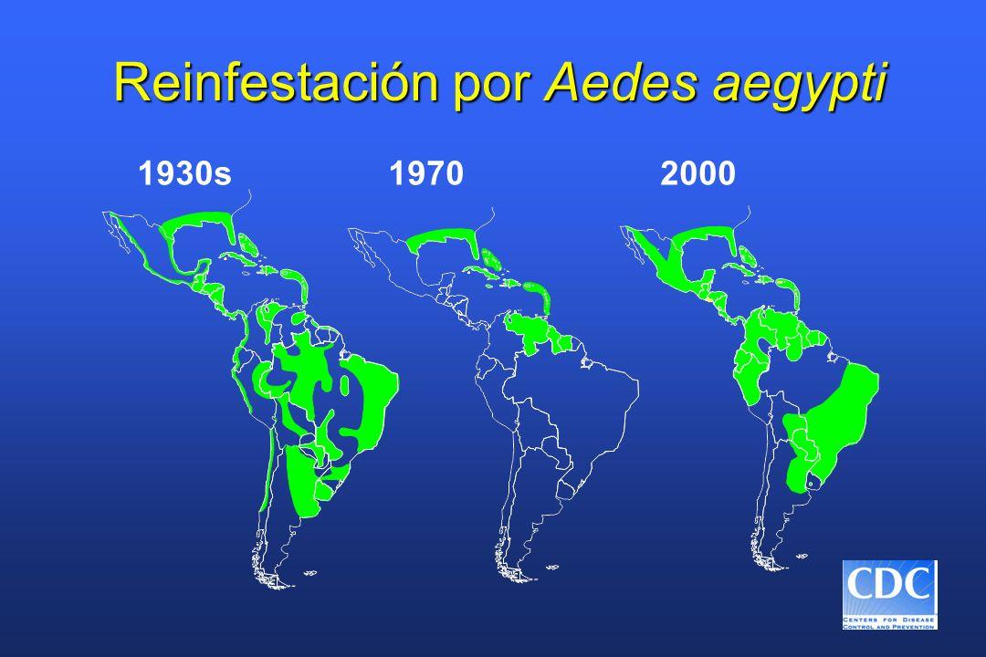 Reinfestación por Aedes aegypti
