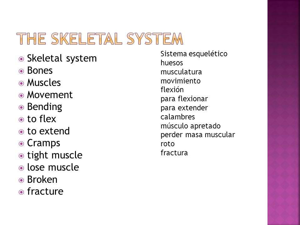 The Skeletal System Skeletal system Bones Muscles Movement Bending