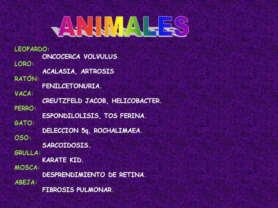 ANIMALES LEOPARDO: ONCOCERCA VOLVULUS LORO: ACALASIA, ARTROSIS RATÓN: