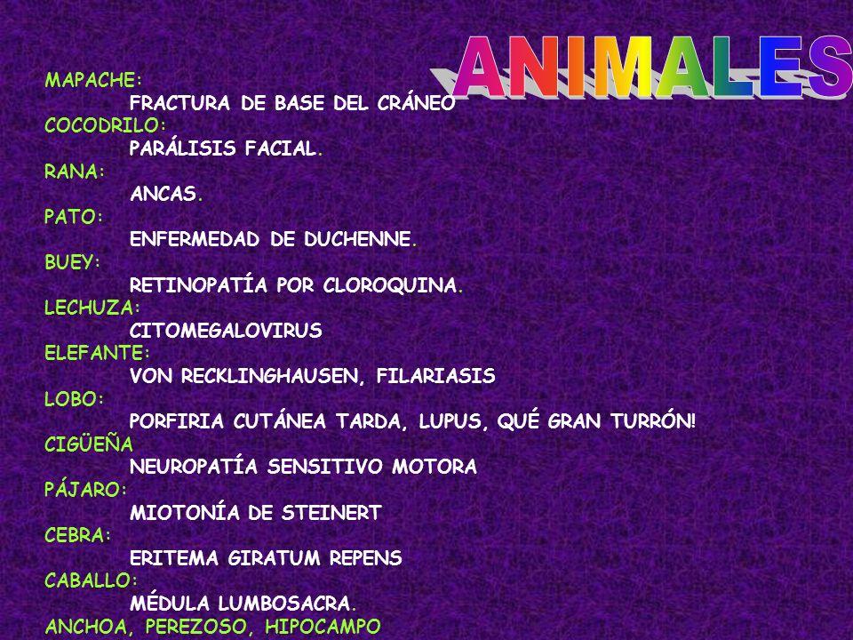 ANIMALES MAPACHE: FRACTURA DE BASE DEL CRÁNEO COCODRILO: