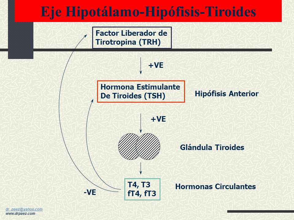 Eje Hipotálamo-Hipófisis-Tiroides
