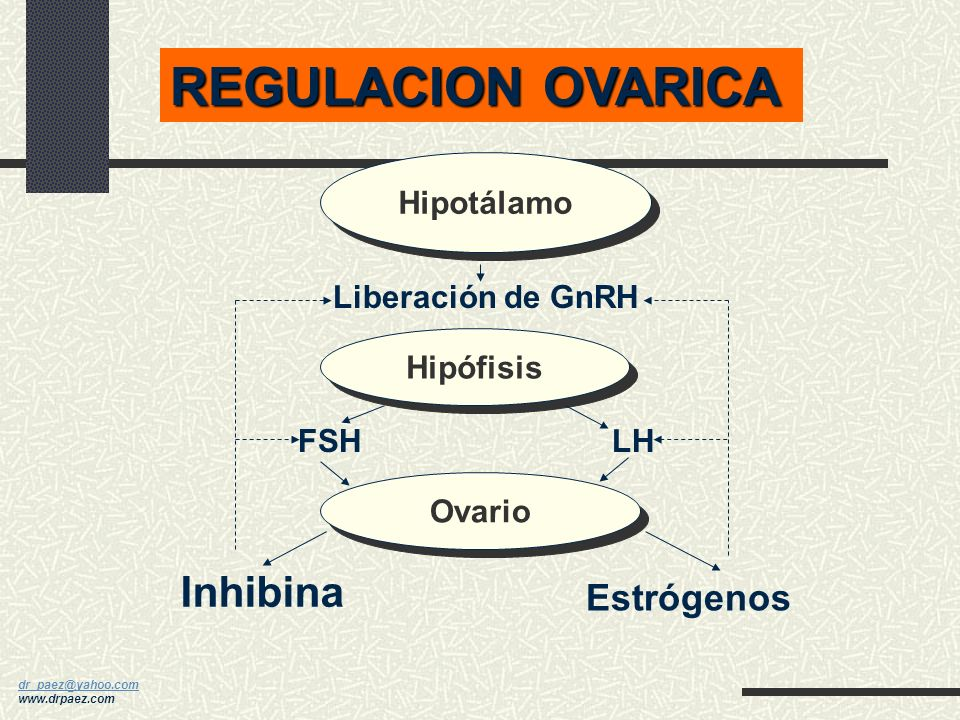 REGULACION OVARICA Inhibina Estrógenos Hipotálamo Liberación de GnRH