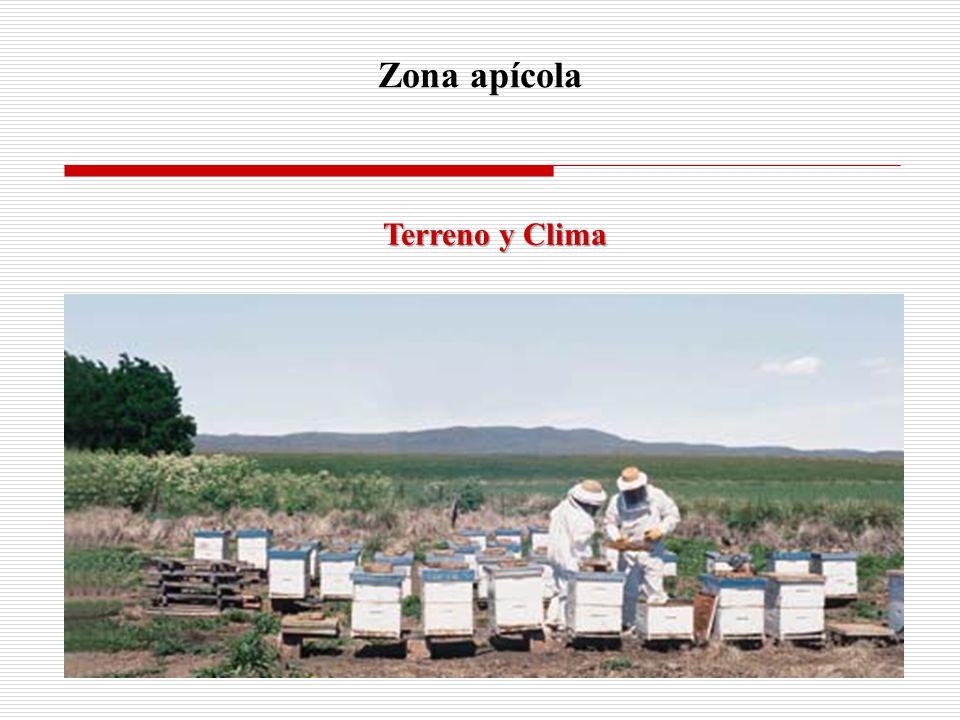 Zona apícola Terreno y Clima