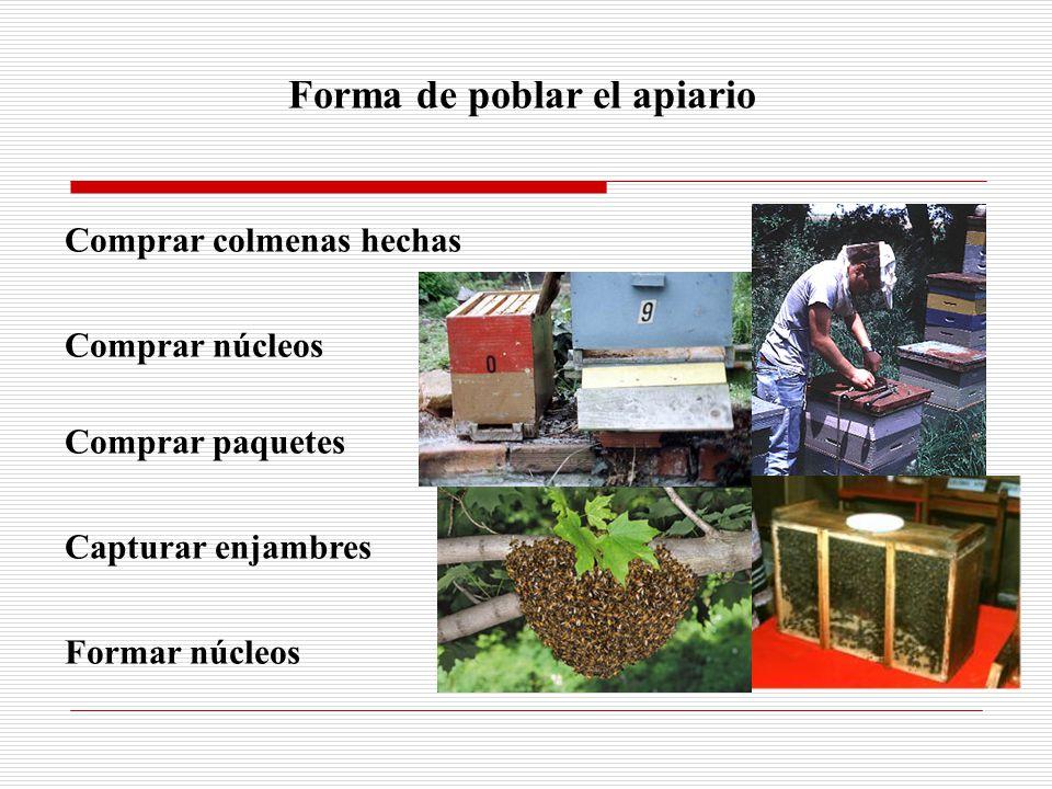 Forma de poblar el apiario