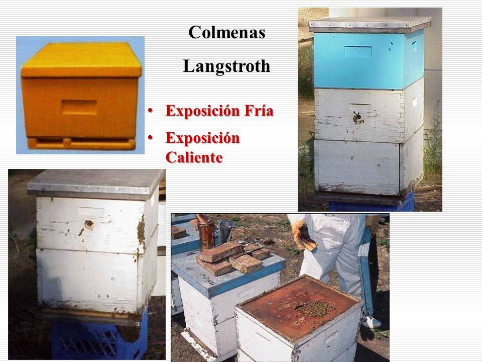 Colmenas Langstroth Exposición Fría Exposición Caliente