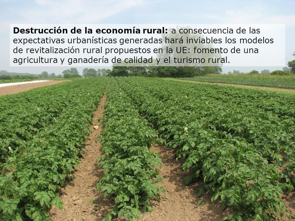 Destrucción de la economía rural: a consecuencia de las expectativas urbanísticas generadas hará inviables los modelos de revitalización rural propuestos en la UE: fomento de una agricultura y ganadería de calidad y el turismo rural.