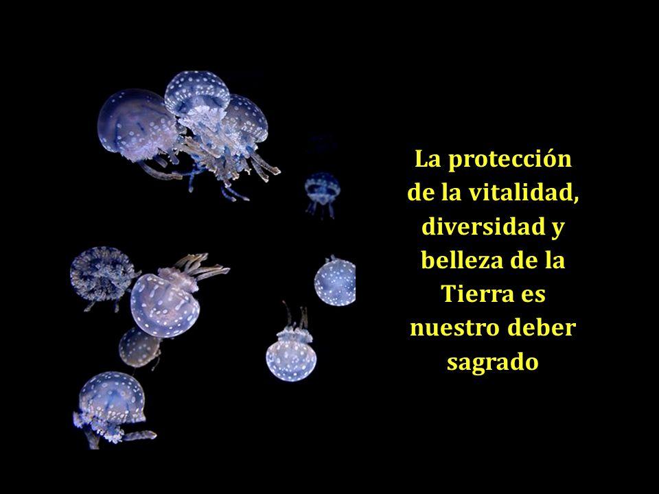 La protección de la vitalidad, diversidad y belleza de la Tierra es nuestro deber sagrado
