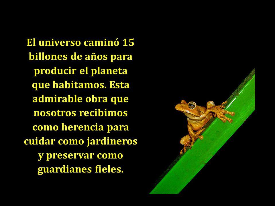 El universo caminó 15 billones de años para producir el planeta que habitamos.