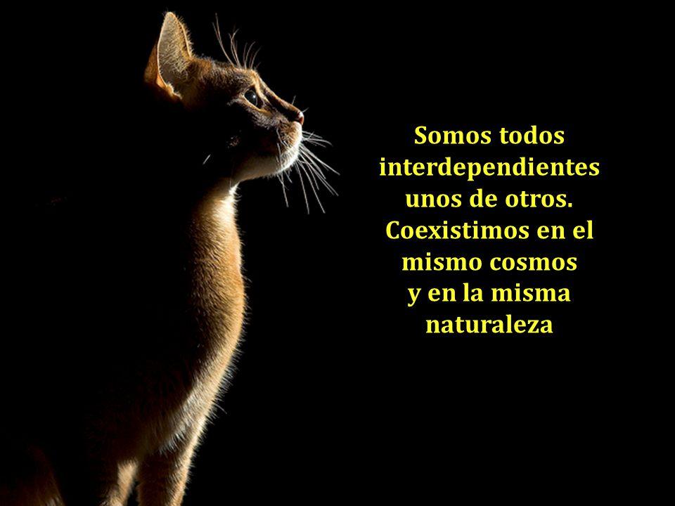 Somos todos interdependientes unos de otros