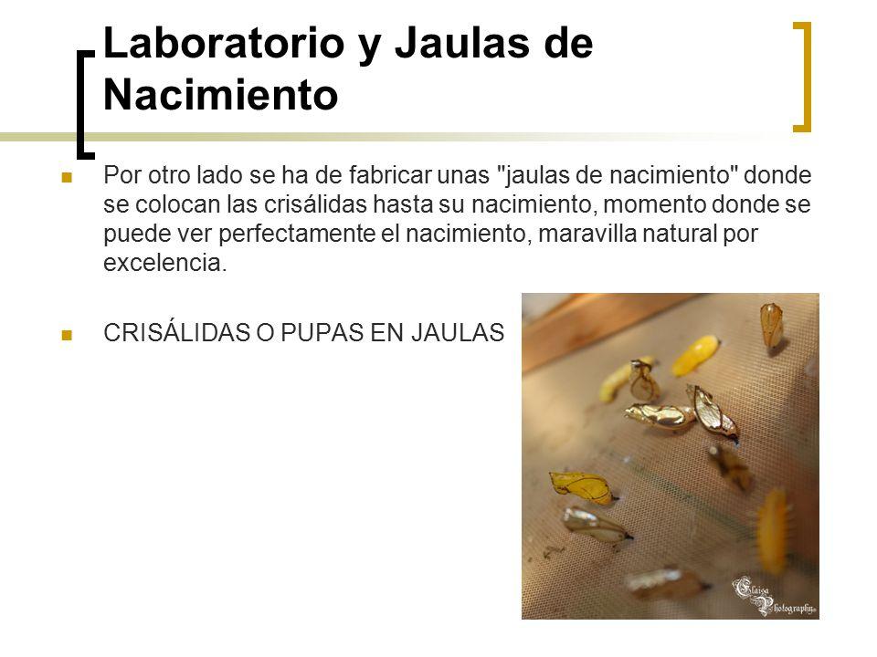 Laboratorio y Jaulas de Nacimiento