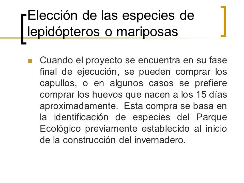 Elección de las especies de lepidópteros o mariposas