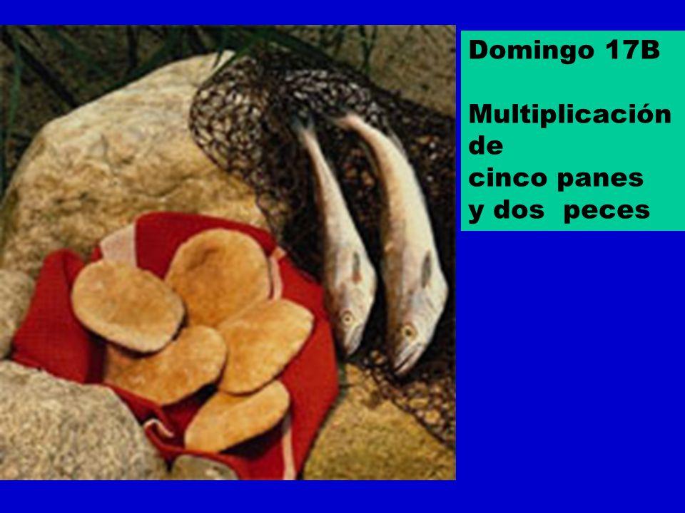 Domingo 17B Multiplicación de cinco panes y dos peces