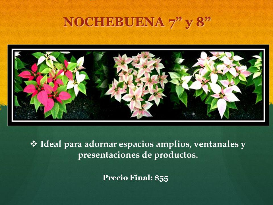 NOCHEBUENA 7 y 8 Ideal para adornar espacios amplios, ventanales y presentaciones de productos.