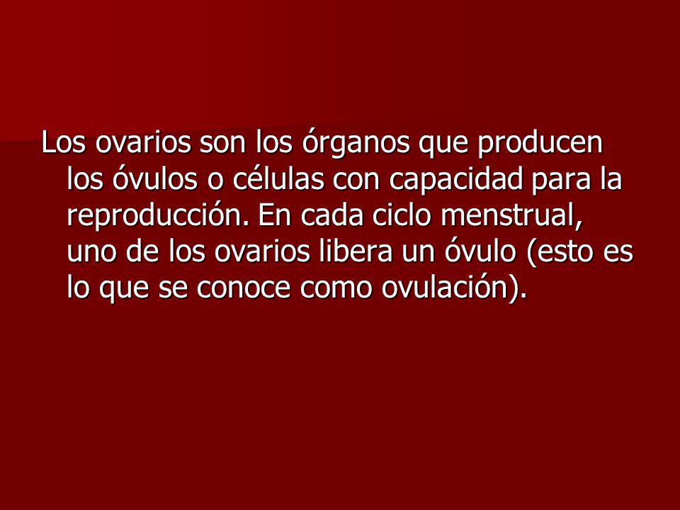 Los ovarios son los órganos que producen los óvulos o células con capacidad para la reproducción.