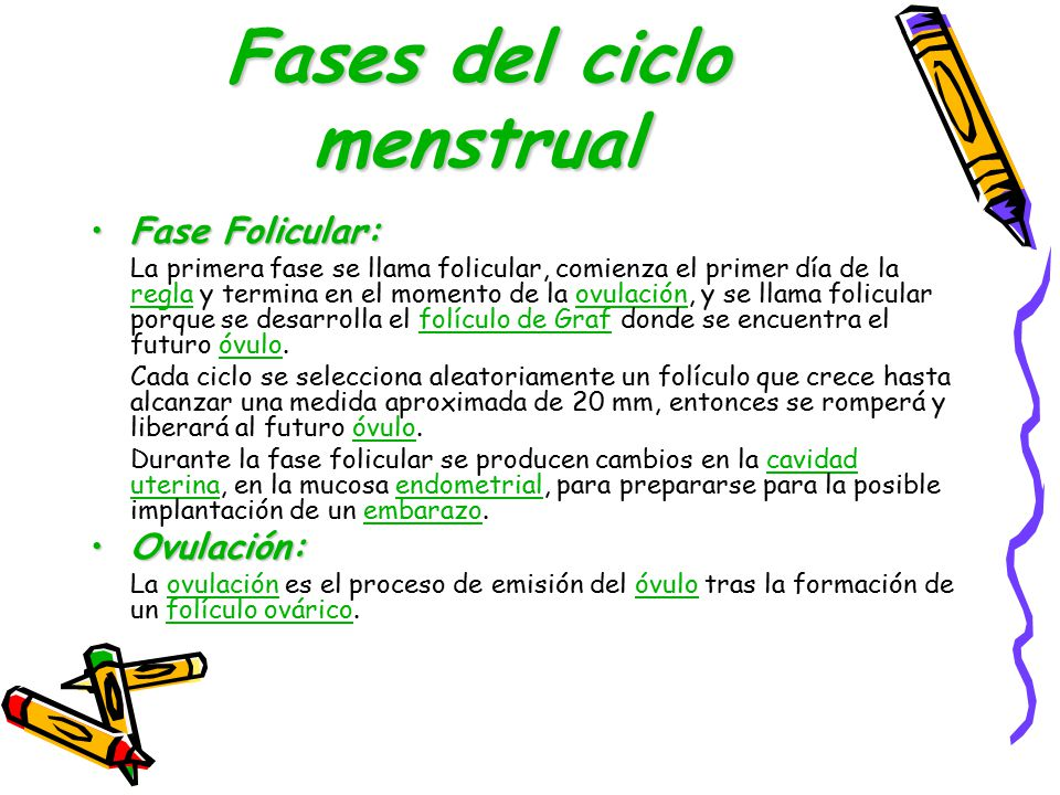 Fases del ciclo menstrual