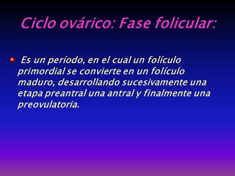 Ciclo ovárico: Fase folicular: