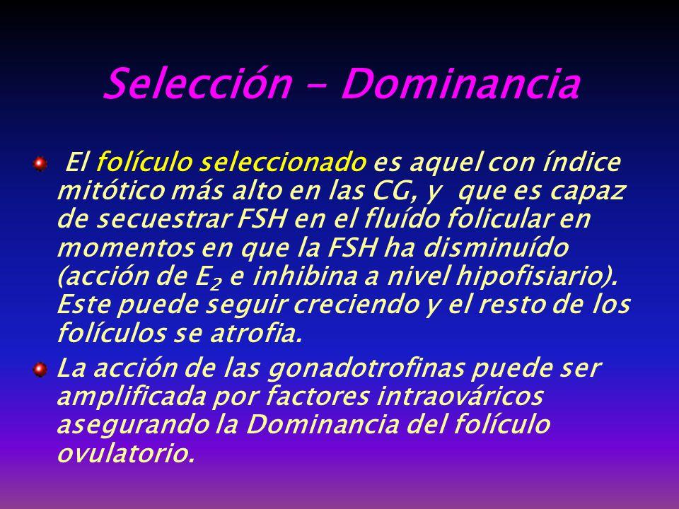 Selección - Dominancia
