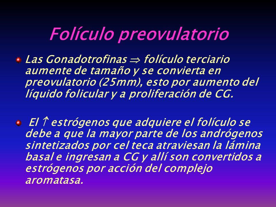 Folículo preovulatorio