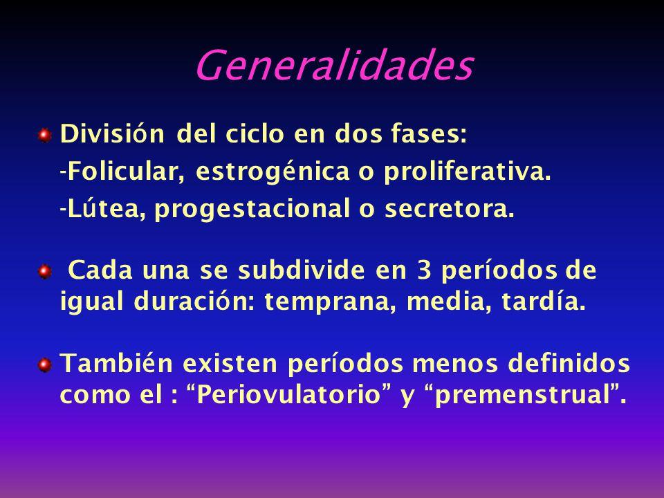 Generalidades División del ciclo en dos fases: