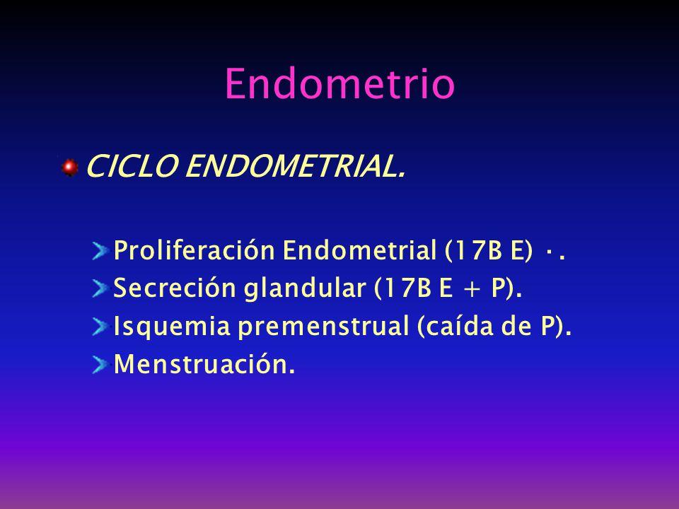 Endometrio CICLO ENDOMETRIAL. Proliferación Endometrial (17B E) ·.