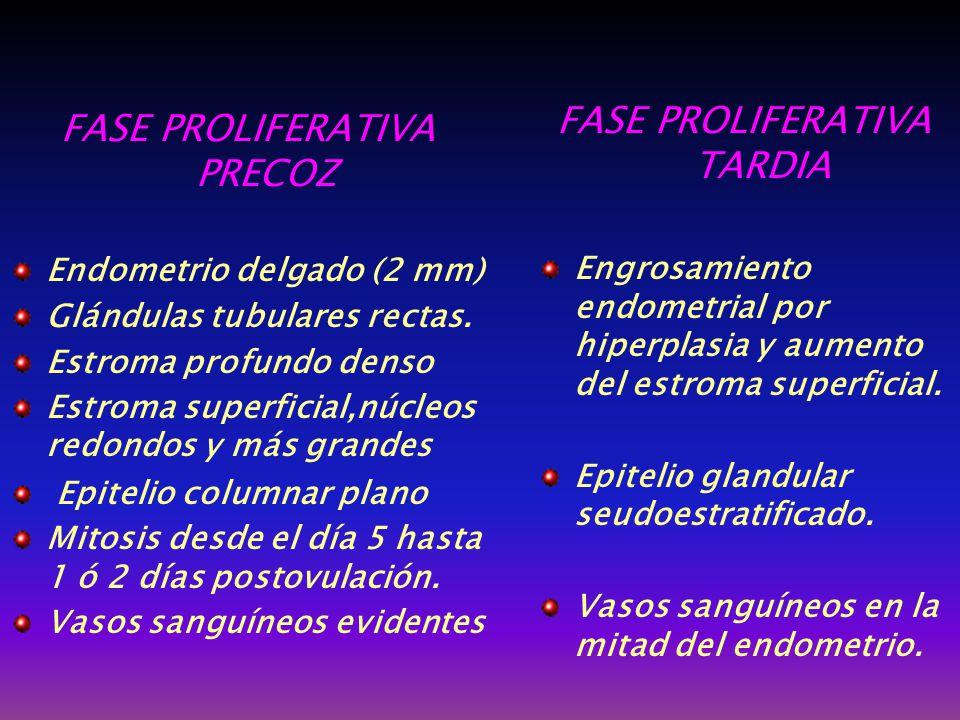 FASE PROLIFERATIVA TARDIA FASE PROLIFERATIVA PRECOZ