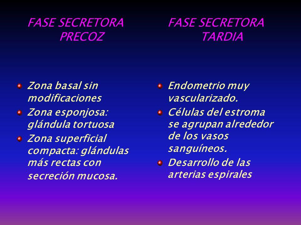 FASE SECRETORA PRECOZ FASE SECRETORA TARDIA