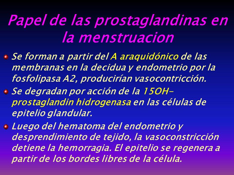 Papel de las prostaglandinas en la menstruacion