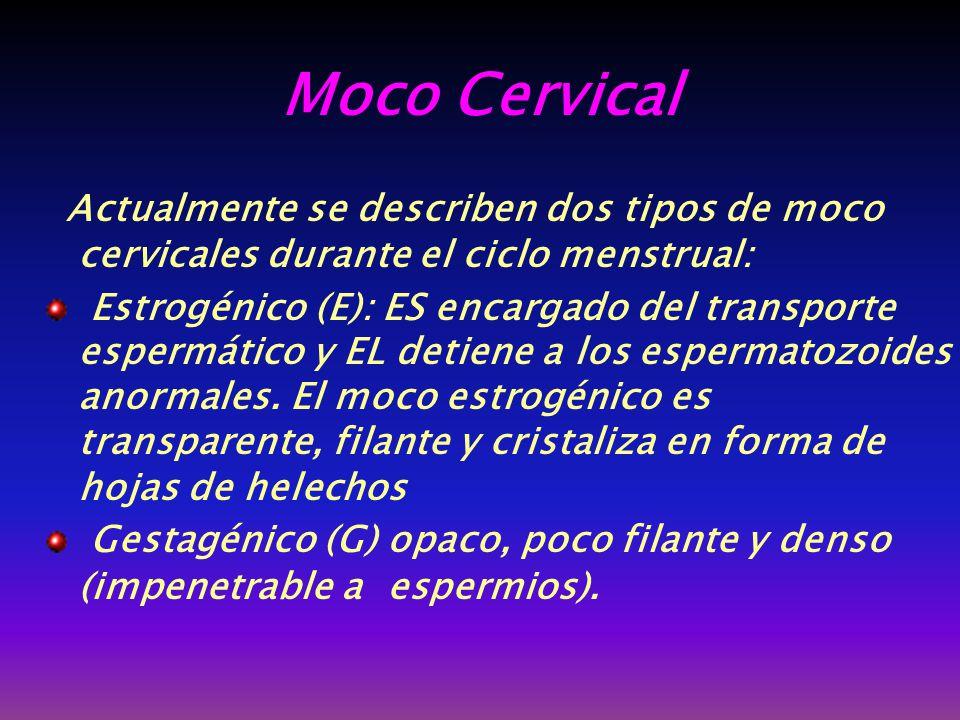 Moco Cervical Actualmente se describen dos tipos de moco cervicales durante el ciclo menstrual: